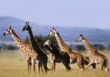 Сафари в Танзания